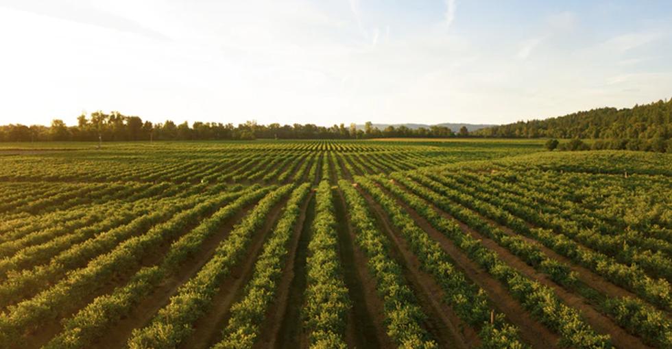 Terrenos Agrarios